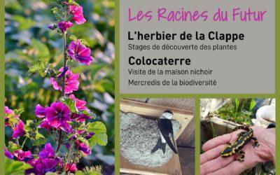 Stages découverte des plantes, visite de la Maison nichoir, Mercredis de la biodiversité – les Racines du Futur