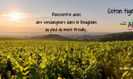 Rencontre avec des vendangeurs dans le beaujolais – Coton-Tige FM
